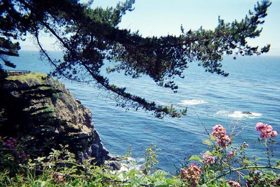 treeandflowers_q.JPG